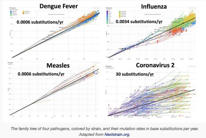 mutacje koronawirusa contra inne betawirusy.jpg