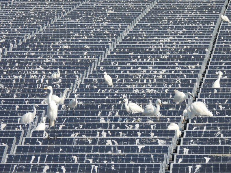solar-guano-farm.jpg
